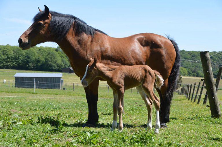 Ty Nenez : Arzano Equitation
