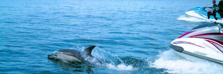 Ty Nenez : Jetski avec dauphins