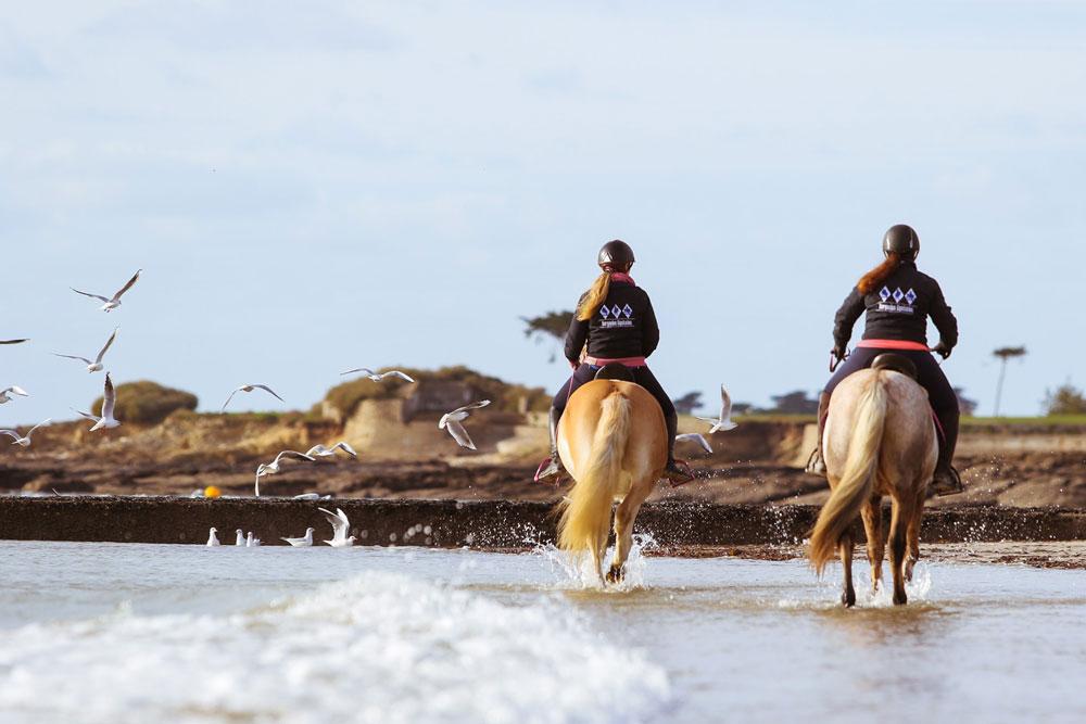 Ty Nenez : Kerguelen Equitation