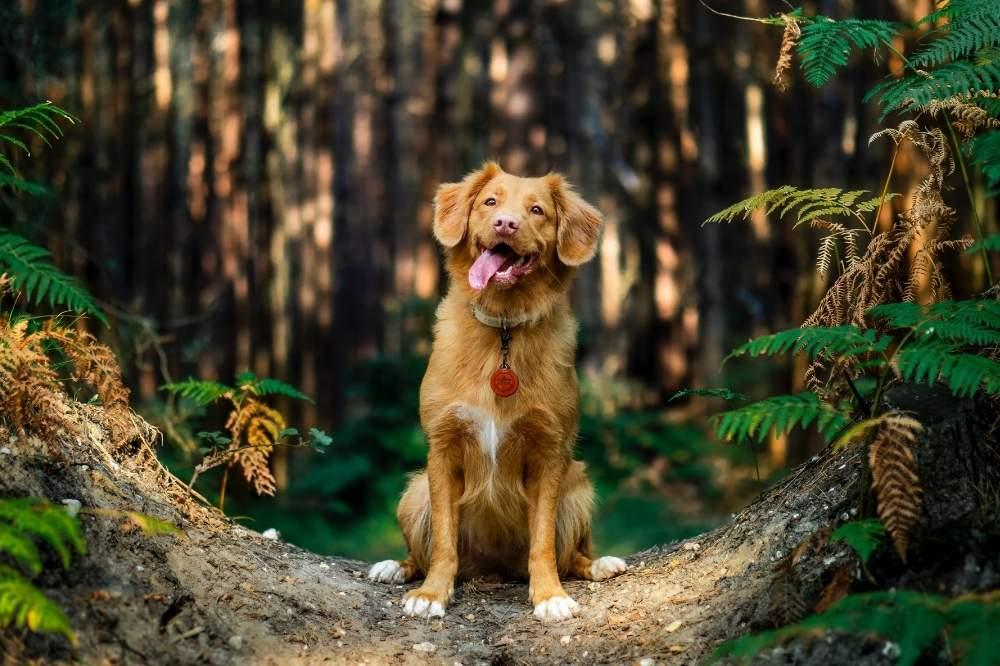 Ty Nenez : Camping qui accepte les chiens Chien à Lorient
